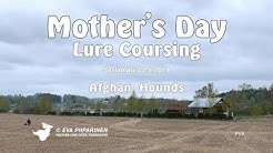 Mother's Day Lure Coursing in Sastamala 12.5.2019 ► Afghan Hounds • 4K Ultra HD