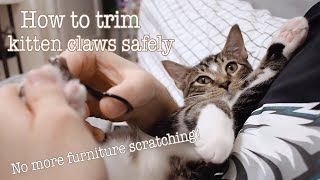 How to cut your kitten's nails
