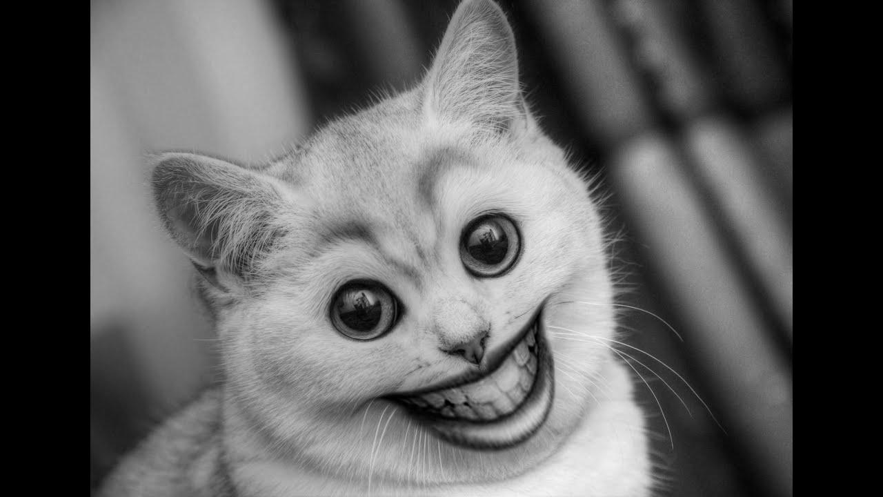 Картинки котиков