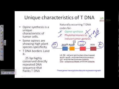 Ti plasmid and T DNA