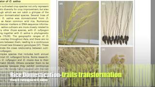 Rice Domestication and Hybrid Rice