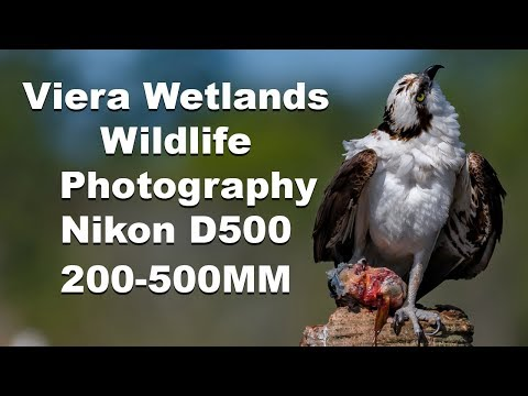 Wildlife / Birding Photography Viera Wetlands Florida Nikon 200-500mm