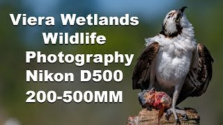 Wildlife / Birding Photography Viera Wetlands Florida Nikon 200-500mm thumbnail