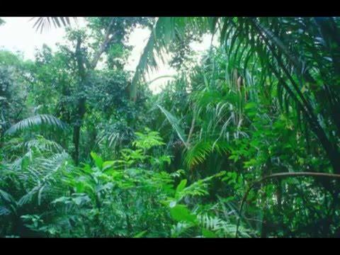 الغابات المطيرة صوت الطبيعة ثلاثي الابعاد Youtube