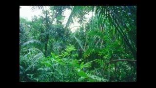 الغابات المطيرة -صوت الطبيعة - ثلاثي الابعاد