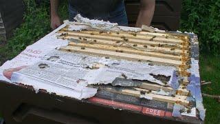Urban Beekeeping: Removing the united broodbox