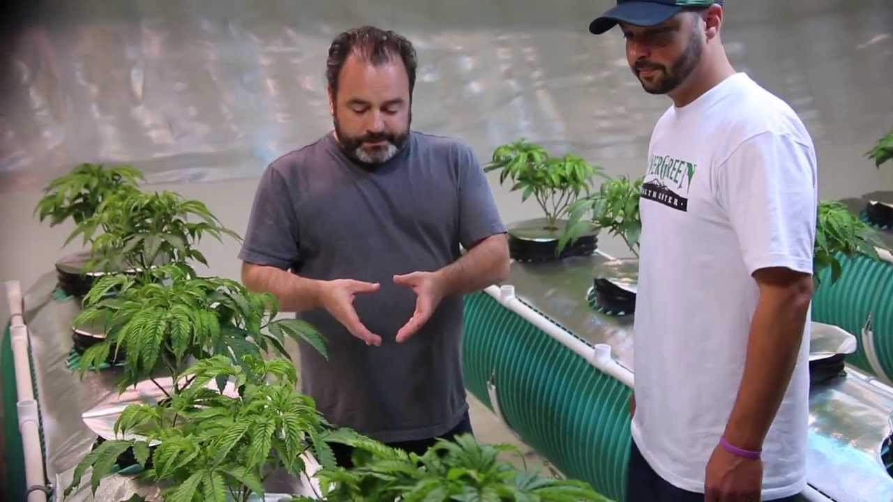 diy aeroponic system with danny danko youtube