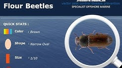 Insect Guide | Flour Beetles Prevention Control