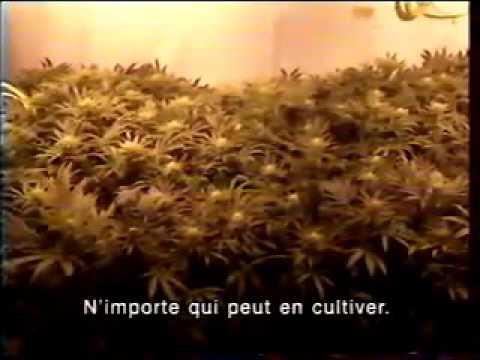 24H Canal+ L'Europe en Petards Cannabis Cup 1994