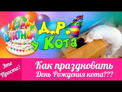 День Рождения У КОТА! Идеи Для Дня Рождения. Приколы с кошками | Это Просто | Лана Мейнарт