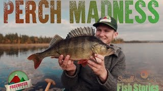 Small Fish Stories -  Perch Madness