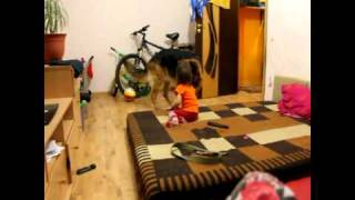 Немецкая овчарка играет с ребенком