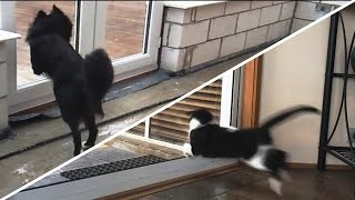 Cats and Dogs vs. Glass Doors Compilation [NEW]