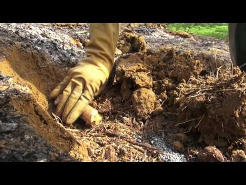 Growing cassava on sloping land - ENGLISH version
