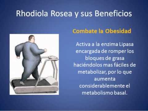 cuales son los beneficios de rhodiola