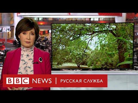Кошмар на улице без вязов: куда исчезли 20 млн деревьев