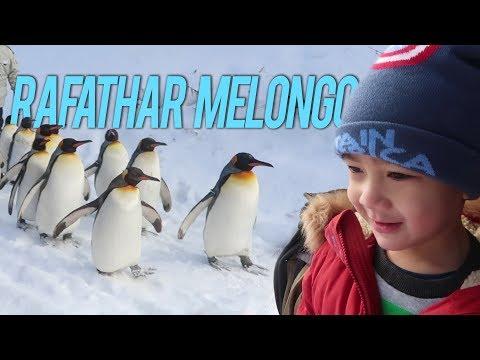 PARADE PINGUIN ASLI DARI JEPANG, BUKAN KALENG KALENG!