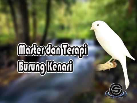 Master dan Terapi Burung Kenari Dengan Suara Air dan Alam