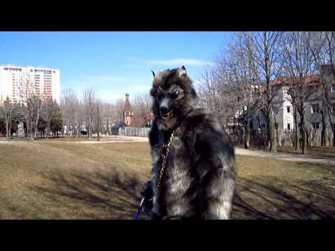 My werewolf suit on the street . Волк на улицах Луганска. 13.03.2014
