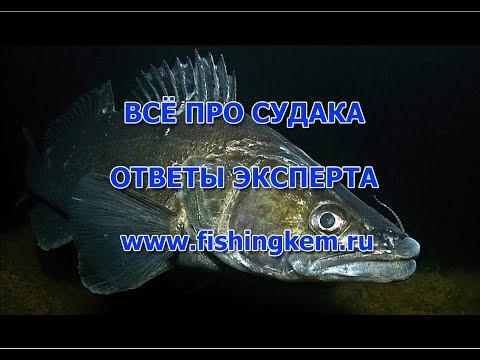 Вопрос: Какая промысловая рыба самая быстрая, что о ней известно?