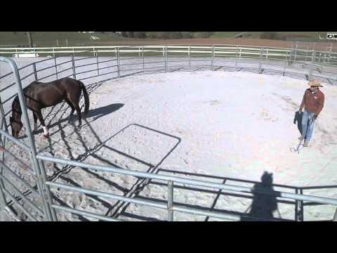 Training an Off the Track Thoroughbred Part 1 - Advantage Horsemanship TV