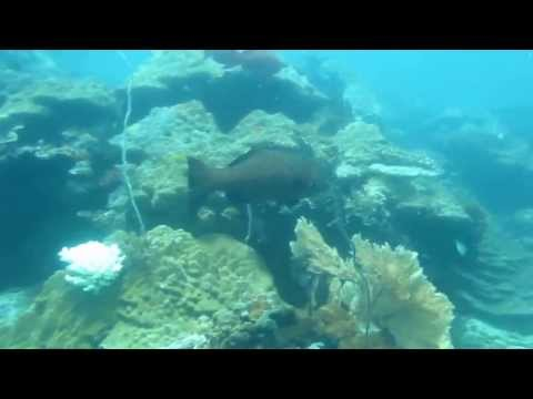 MANTA DIVING Madagascar,Immersioni a Nosy Be al Parco Marino di Tanikely  (Puffolandia Reef)