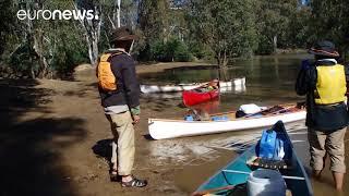 Australia: Students Use Canoe to Rescue Koala