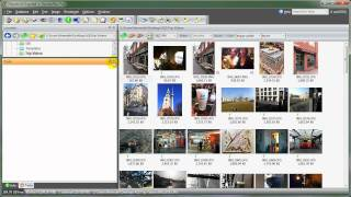 Window Layout in  ThumbsPlus 8.0