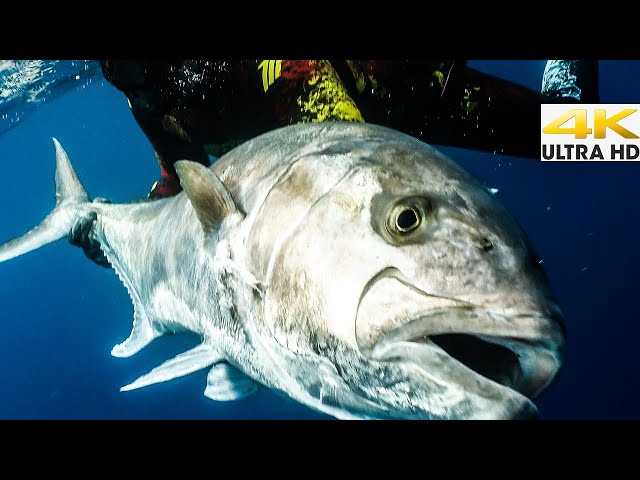 Spearfishing 🇬🇷  The GREAT Amberjack 🌊BLUE WATER ACTION-CATCH and COOK🔥A DREAM Come TRUE✅