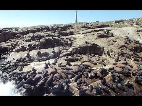 Video aéreo en la Isla de Lobos, Uruguay Desde Lo Alto