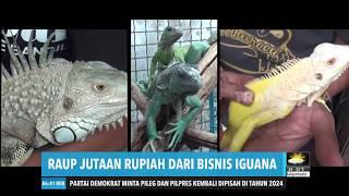 Raup Jutaan Rupiah Dari Bisnis Iguana  Redaksi Pagi 131219