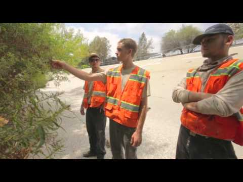 Urban Wildlife Conservation: Los Angeles | Restoration + Recreation