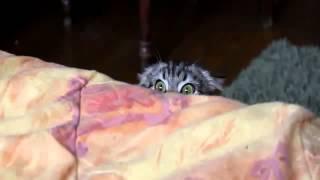 Дьявольский кот