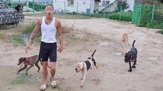 사냥 강아지들 근황 (잘키우는중♥)