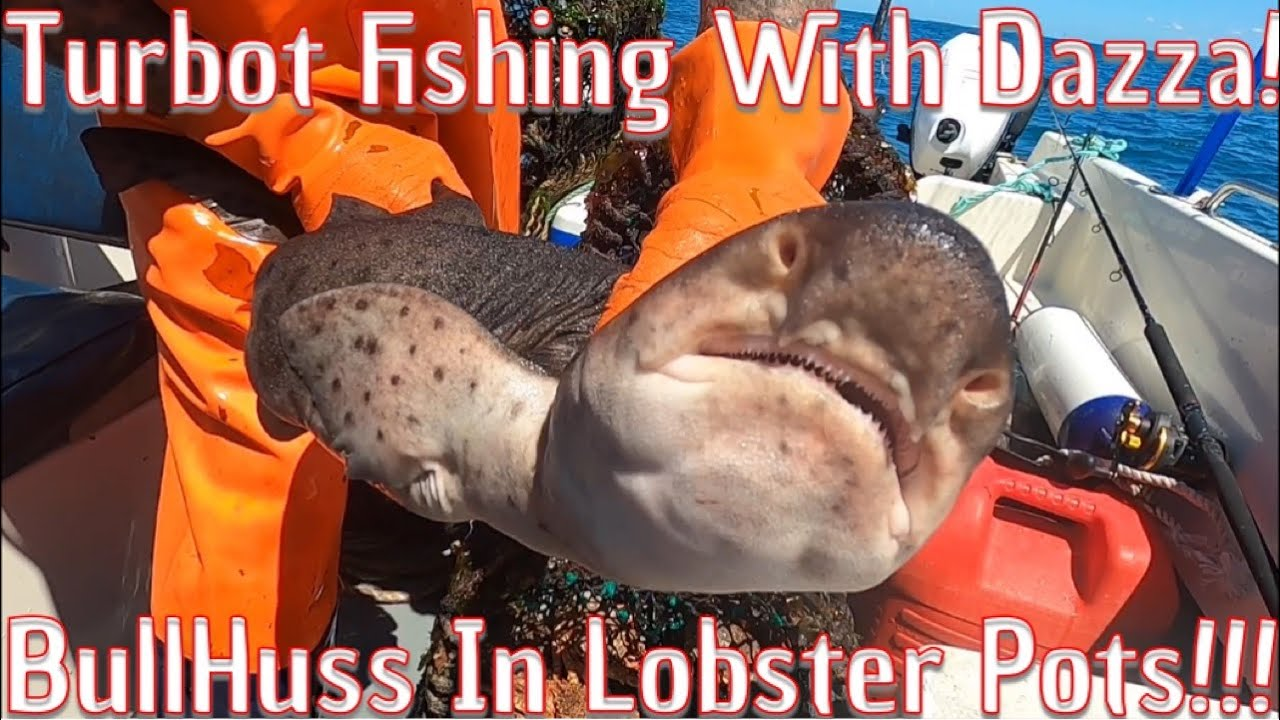 Ray And Turbot Fishing Plus Shark In My Lobster Traps!!!