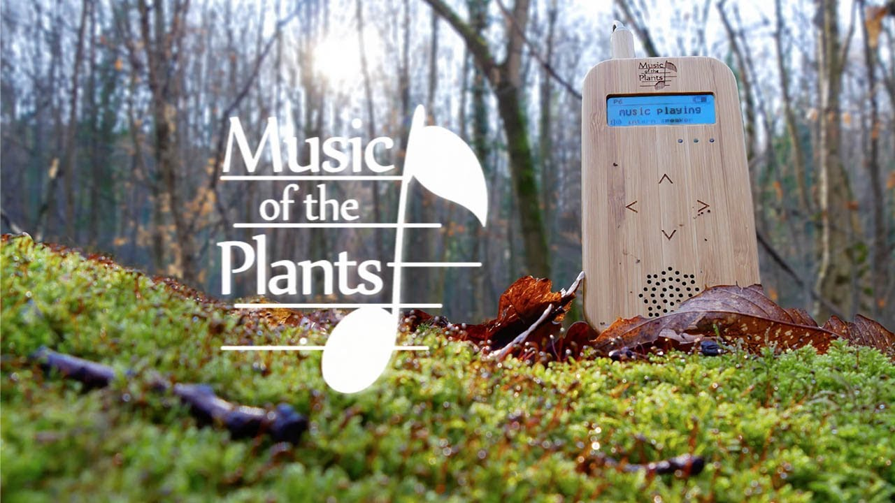 Music Of The Plants Instant Calm Beautiful Relaxing Dreamy Music Nature Energy Healing Youtube
