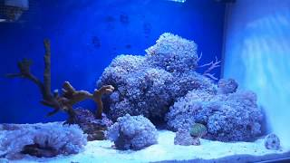 Amtra Wave Aqua Orion 40 Pico Reef Meerwasseraquarium 20l