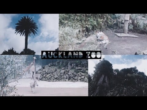 AUCKLAND ZOO | AUCKLAND ADVENTURES • Sophie Sinclair