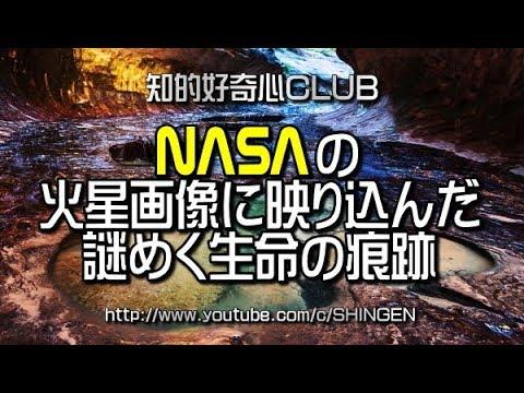 NASAの火星画像に映り込んだ謎めく生命の痕跡 428
