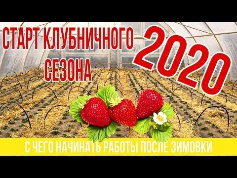 Старт клубничного сезона 2020 года.С чего начинаем
