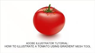 How to create a Tomato Vector in Adobe Illustrator