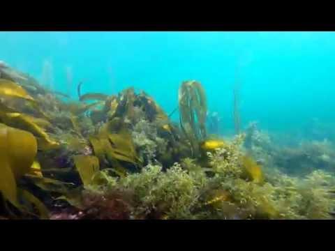Our Scuba Trips | Dive Academy Dive Trip 2014