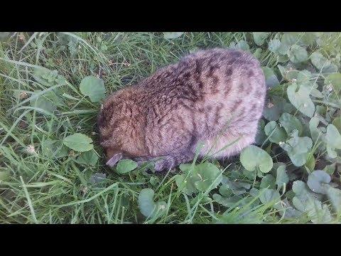 Кот спит мордой вниз ) Сat is snouting down