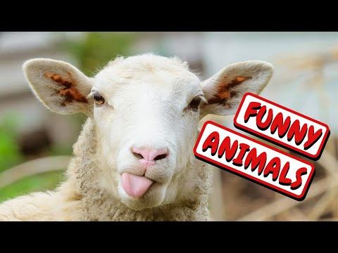 Funniest Animals | Funny Cute Baby Animal Videos Compilation