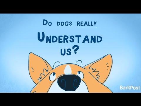 Inside A Dog's Brain: Do Dogs Really Understand Us?