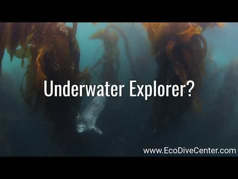 Explore California Underwater - Boat Diving Adventures at Eco Dive Center