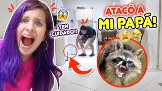 ATACO A MI PAPA! 🦝😱 UN ANIMAL SALVAJE SUELTO EN CASA! | Leyla Star 💫