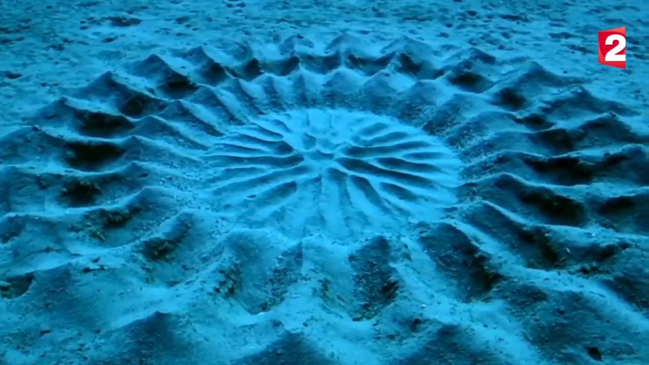 un poisson ballon dessine une rosace parfaite sur le sable au fond de l 39 eau youtube. Black Bedroom Furniture Sets. Home Design Ideas
