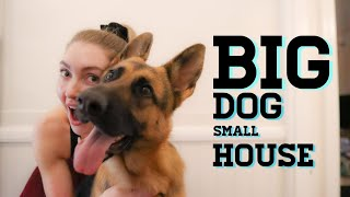 Owning a big dog and living in a small house