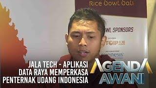 Agenda AWANI: Jala Tech - Aplikasi data raya memperkasa penternak udang Indonesia